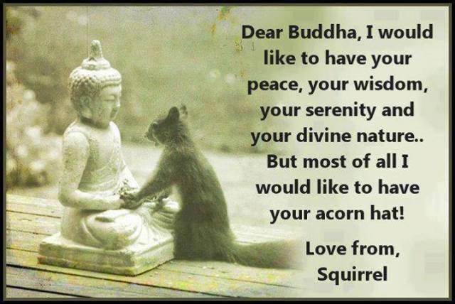 buddhaandthesquirrel